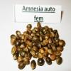 Семена Amnesia auto fem