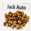Семена сорта Jack auto