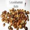 Tutankhamon auto  variedad