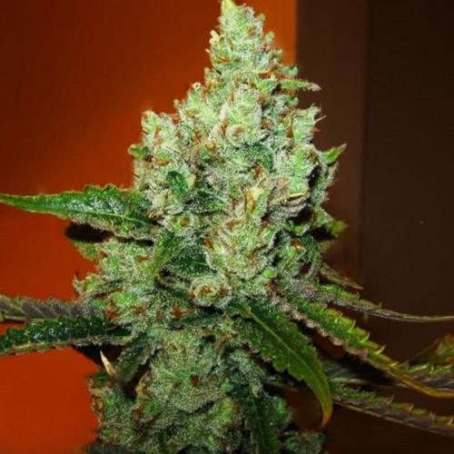 Best Marijuana Strains for Making Edibles