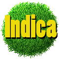 Indica cannabis seeds.